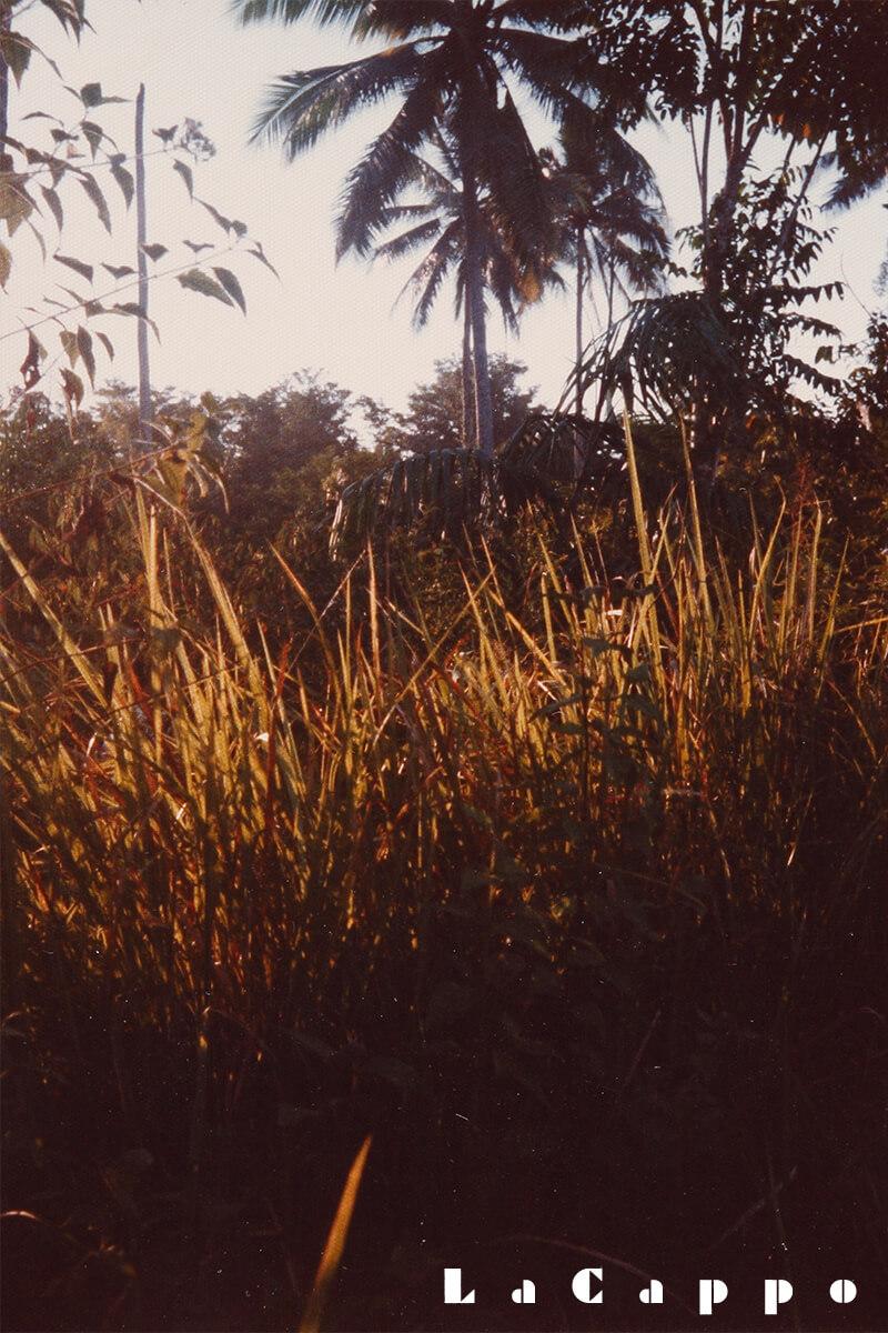 現地の生育地の写真