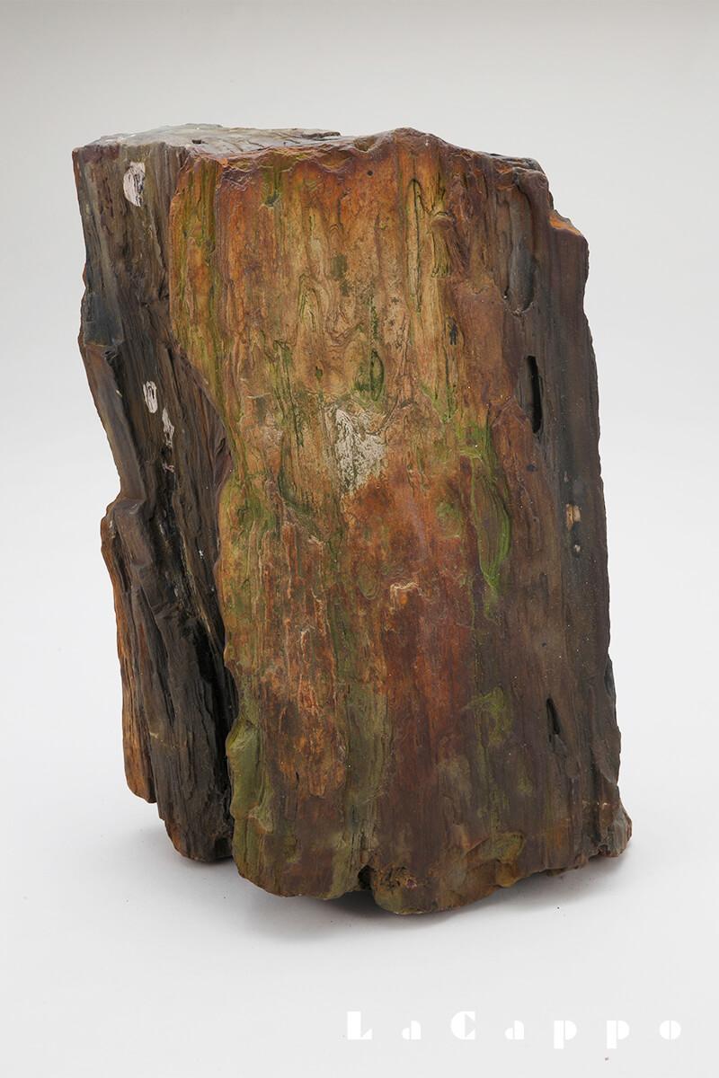 秋田県出土品:珪化木、ナラ材
