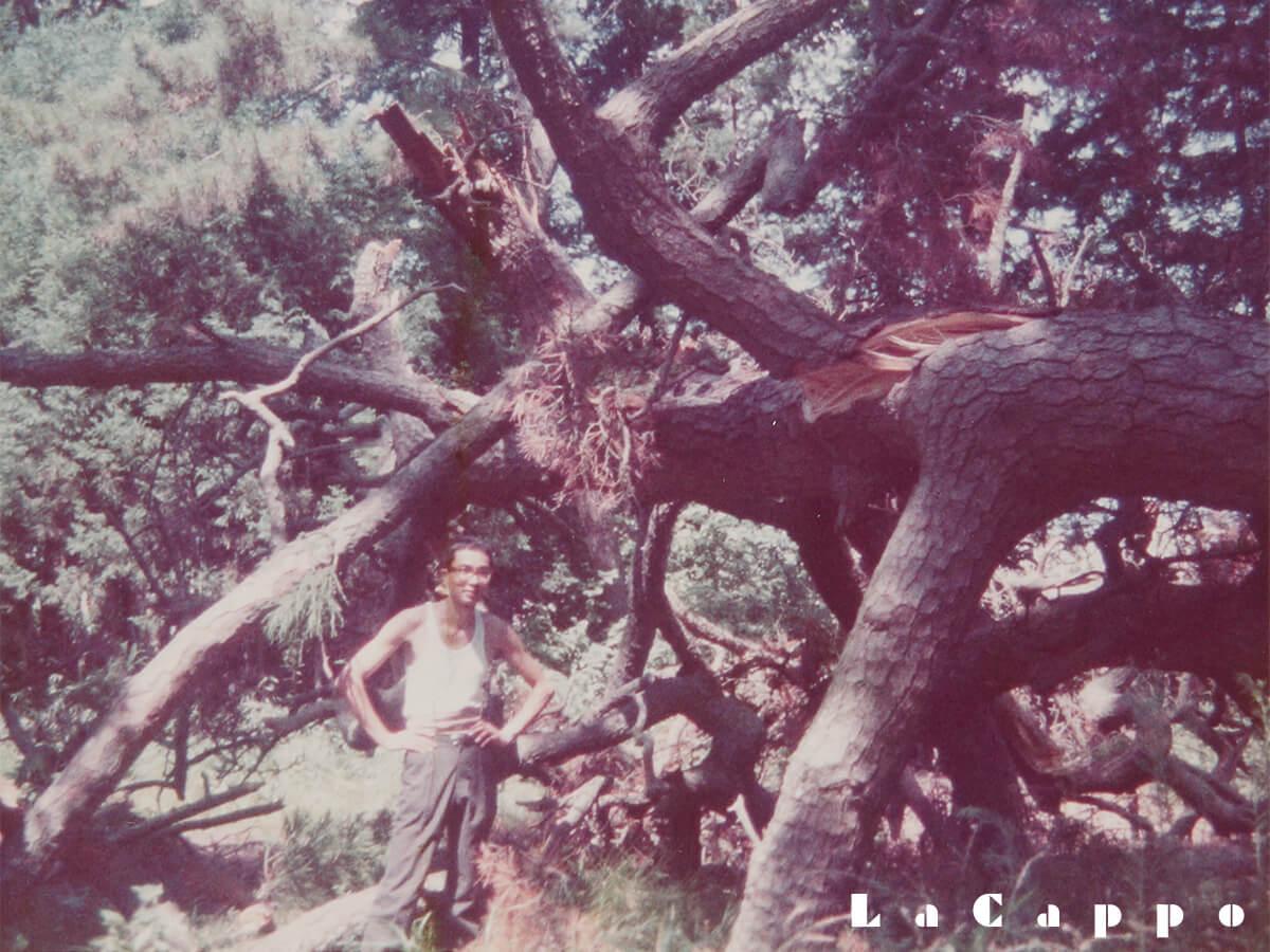 道了松(どうりょうまつ)の伐採風景