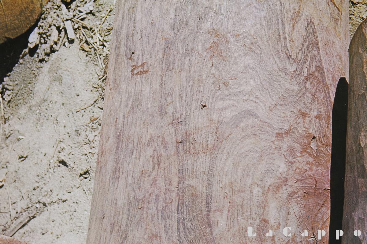 伐採時の胴割れ部分