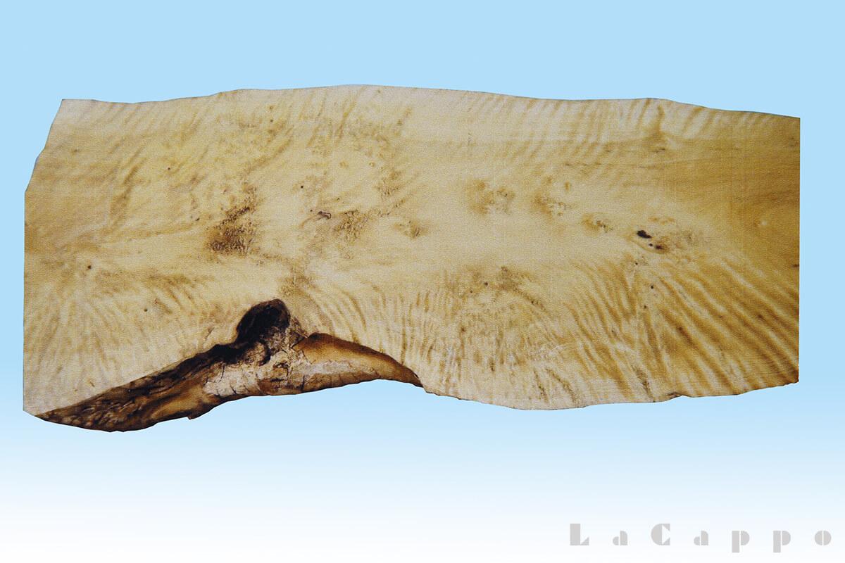 滅多に出ない柘植のチヂミ・小玉の良材・良杢材