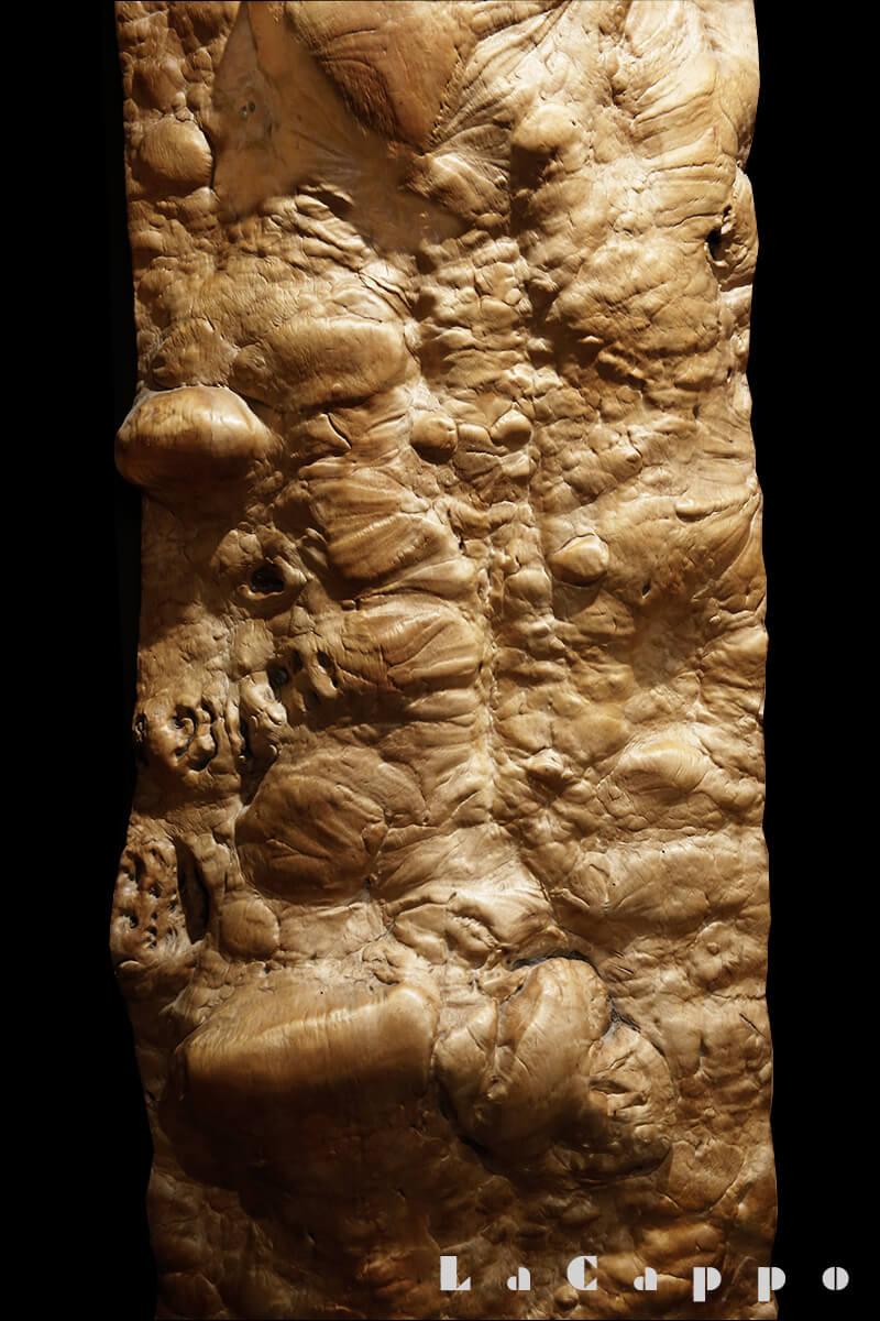 樹齢400年を越える幹に出た栃のコブ