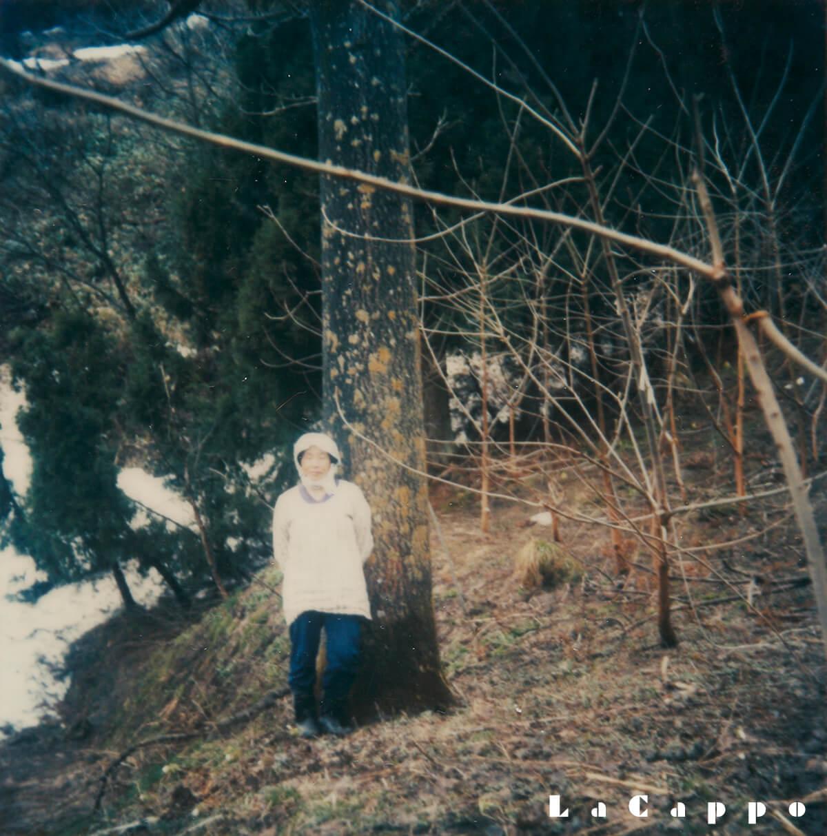 本場福島県会津の栽培農家で持っている桐丸太第一枝まで6m70cmの樹齢230年物の桐