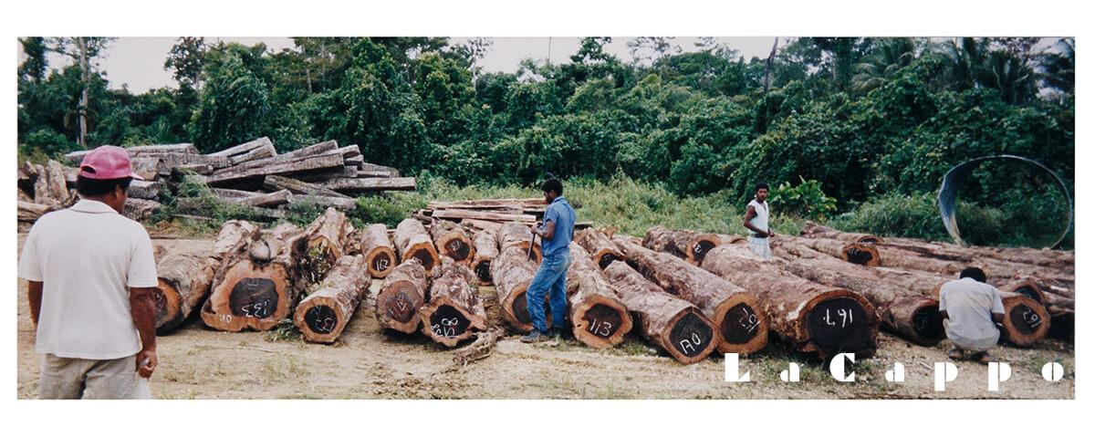 黒檀の伐採現場