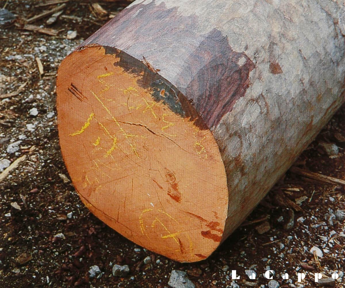 1970年代に伐採された紫檀の丸太