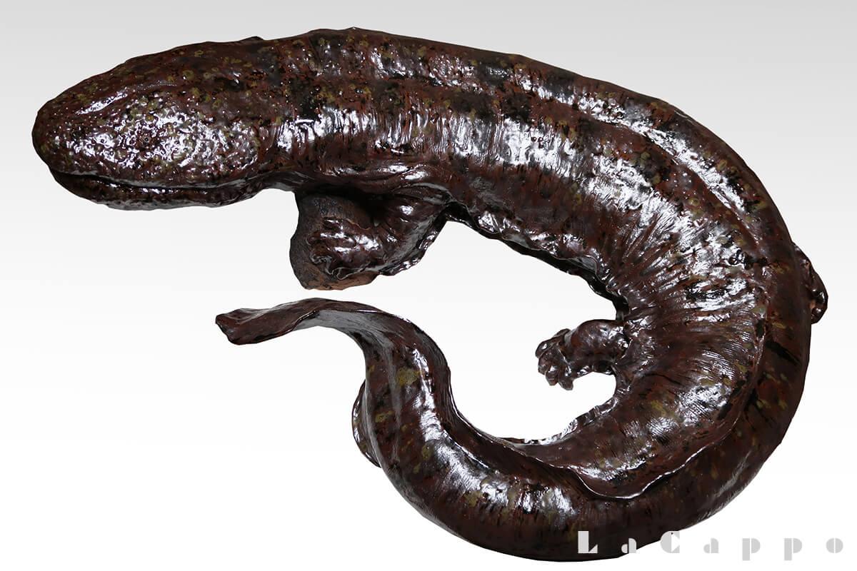 日本産の大山椒魚(オオサンショウウオ)