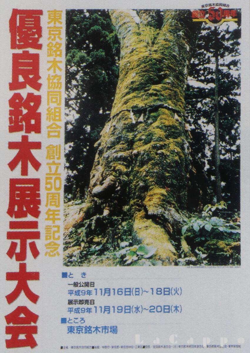 松之山、欅(ケヤキ)丸太が入ったポスター