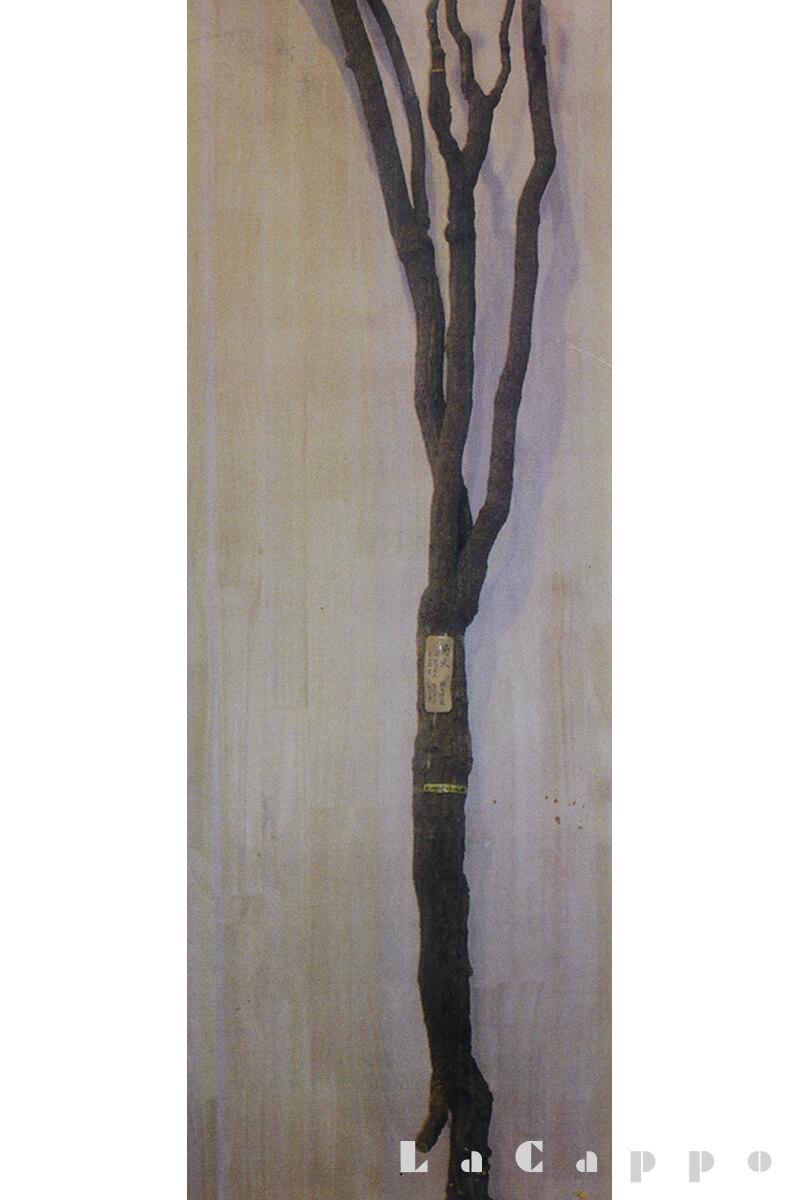 材木店のコレクターさんが持っている枝分かれがあるものの径9cm近く有り、立派な材