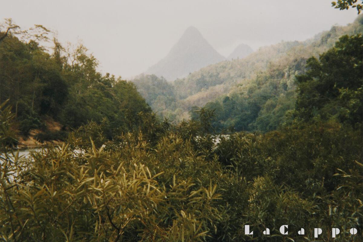 遠くに見える山を目指し、その麓(ふもと)にチークの林相があると言う(まるで山並みを見るとジェラシックパークですね)。