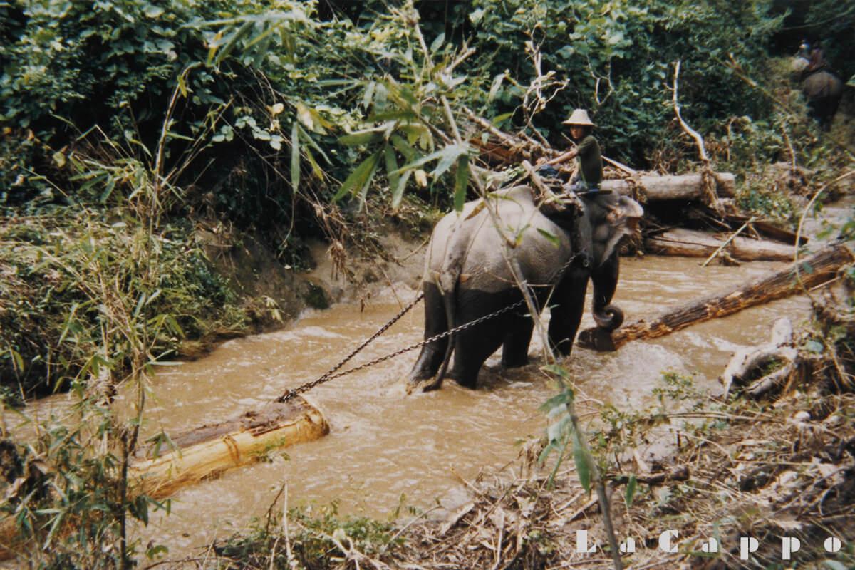 小川を使い少しでも軽く運搬出来るように上手く象を使います。