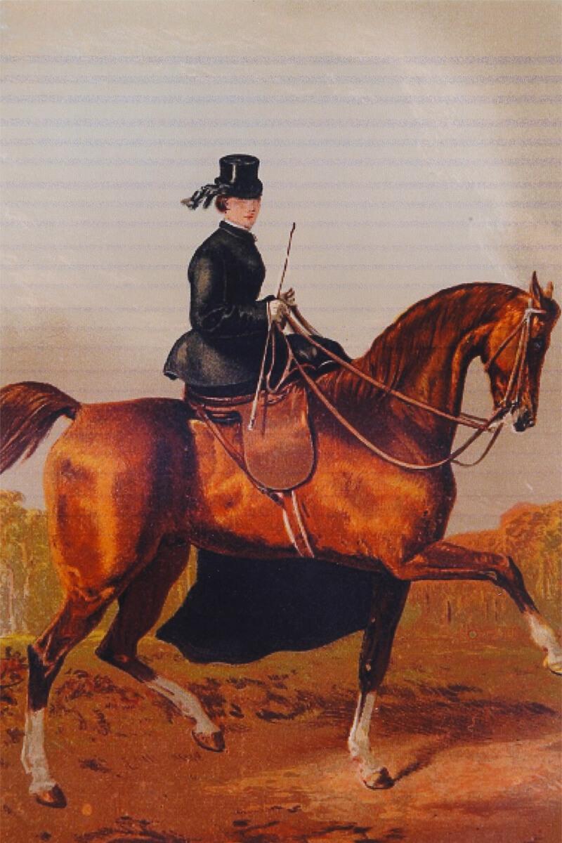 上品なステッキ型のムチ(短鞭:たんべん)を持つ乗馬姿