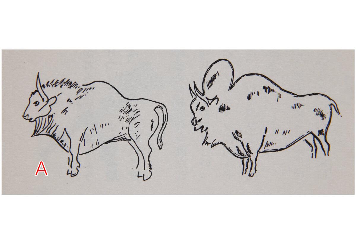 スペイン・アルタミラの壁画(今から2万年前)には、コブ牛の野牛や、現在のバイソン・トナカイ・毛サイも描かれています。